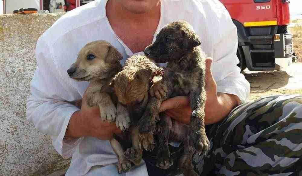 Rescate de cachorros en un pozo en Herencia (Ciudad Real) 3