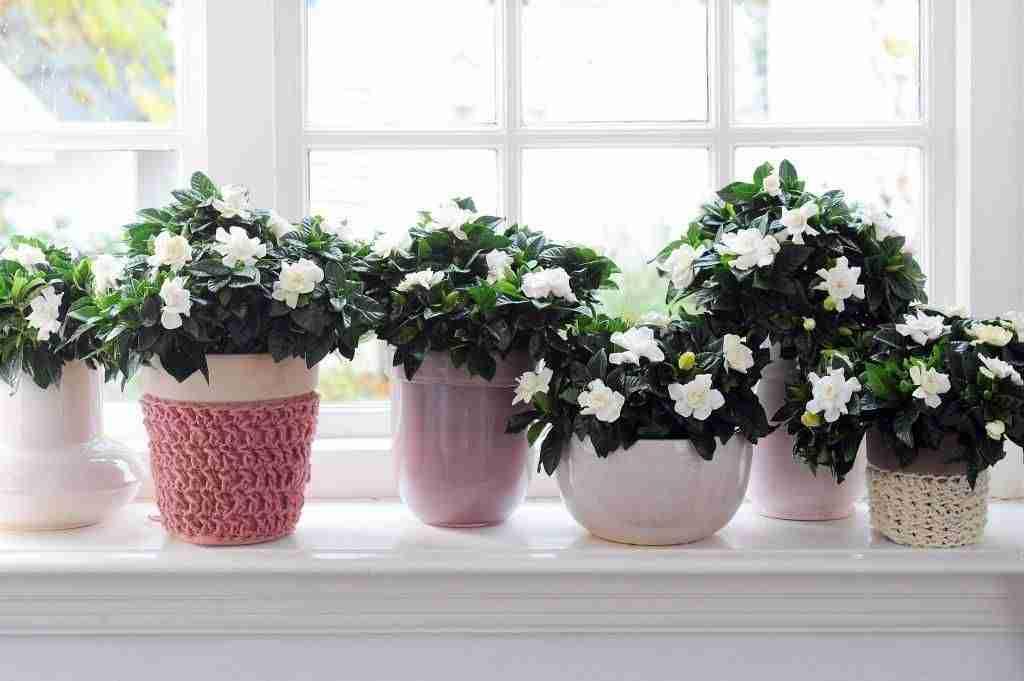 decorar con flores V