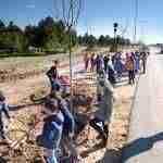 Día Forestal Mundial plantando árboles en la vía verde en Argamasilla de Alba 6