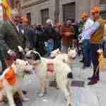 Miles de cazadores toman las calles de Castilla-La Mancha para reivindicar la caza 3