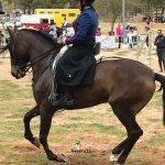 Celebrada en Herencia la 2ª Liga Social de Equitación en Herencia 13