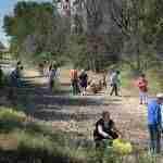 Decenas de voluntarios participan en la limpieza del río Guadiana en Argamasilla de Alba 3
