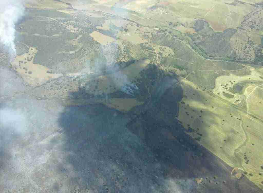 Más de 100 efectivos trabajan para extinguir el incendio forestal en Miguelturra 1