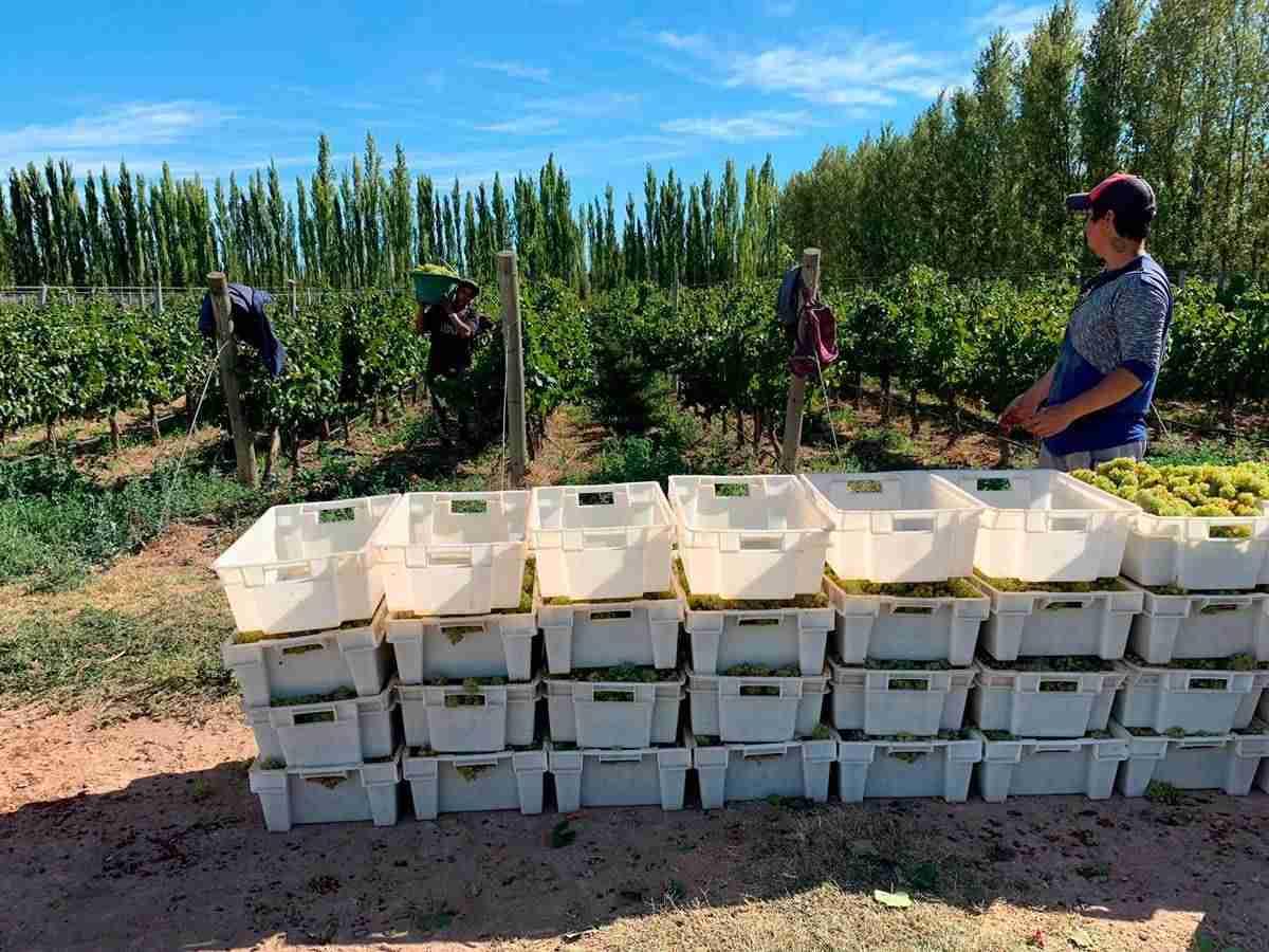 Ulterior, los vinos de tinaja de verum toman posición en concursos internacionales 3