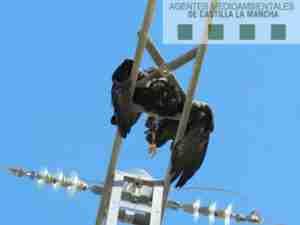 """Los Agentes Medioambientales, preocupados la """"opacidad"""" en los procedimientos sancionadores por casos de electrocución de fauna en tendidos eléctricos 1"""