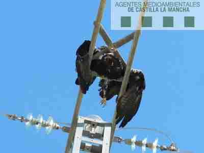 """Los Agentes Medioambientales, preocupados la """"opacidad"""" en los procedimientos sancionadores por casos de electrocución de fauna en tendidos eléctricos"""