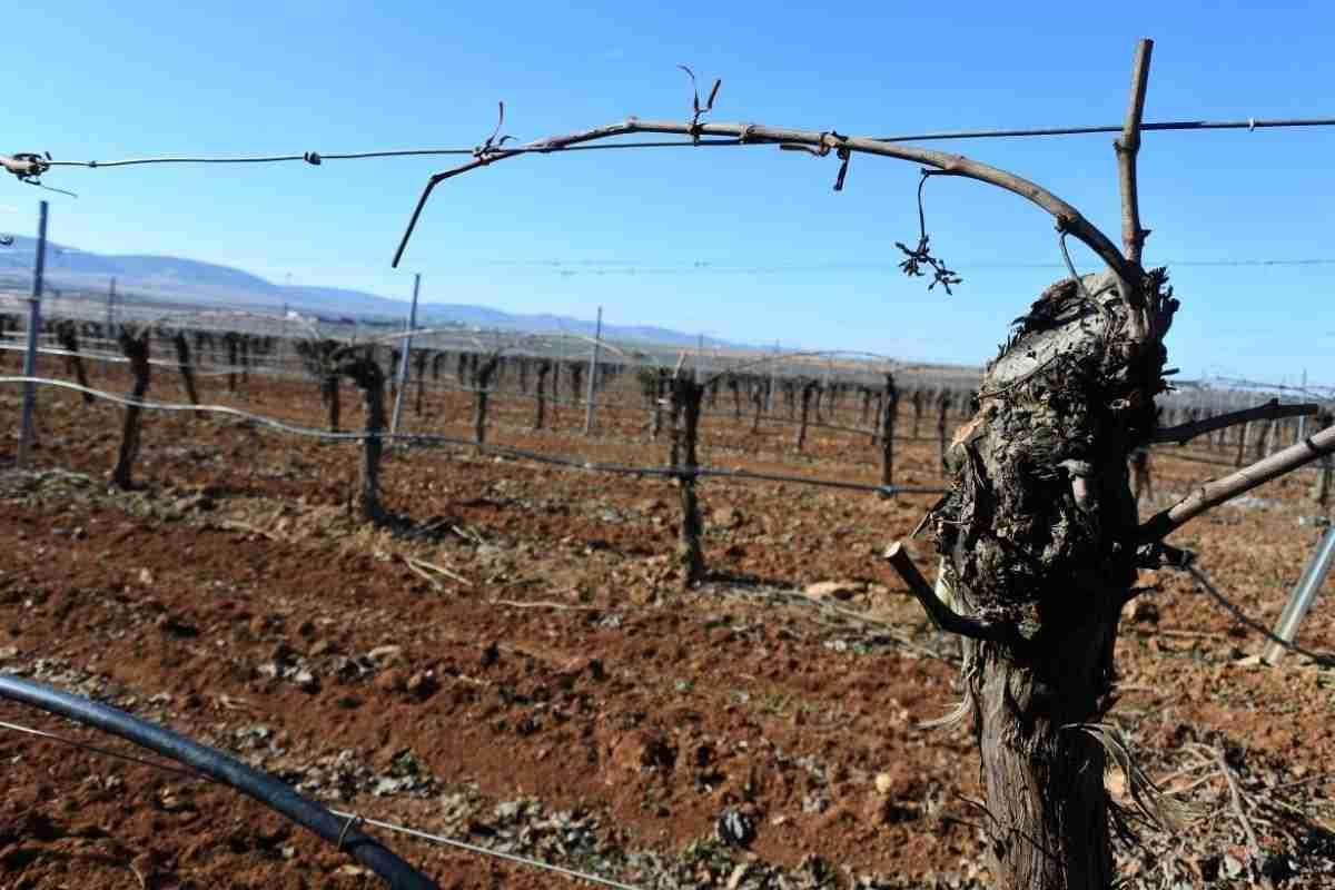 Castilla-La Mancha contará con el 55,6 por ciento de los derechos para nuevos viñedos para la campaña 2018-2019 1