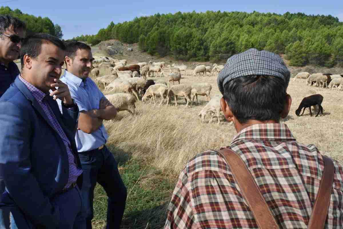 Más de 5,4 millones de euros en ayudas recibirán hoy 3.500 agricultores y ganaderos de CLM 1