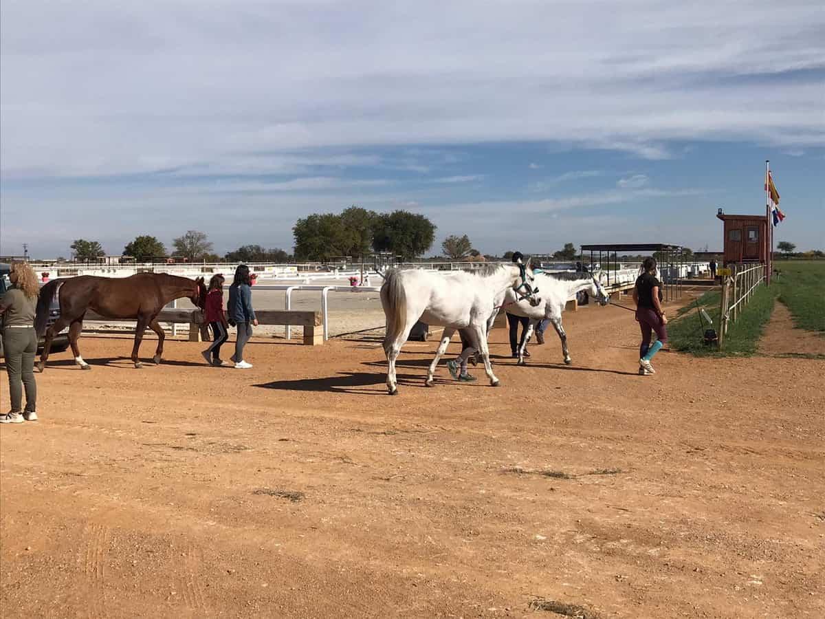 El Campeón de España en Concurso Completo de Equitación será elegido este fin de semana en Tomelloso 3