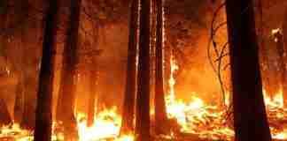 evento prevencion y extincion de incendios forestales en cumbre del clima