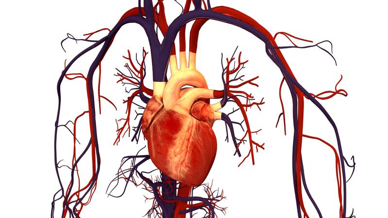 El ejercicio terapéutico disminuye el riesgo de padecer enfermedades cardiovasculares 3