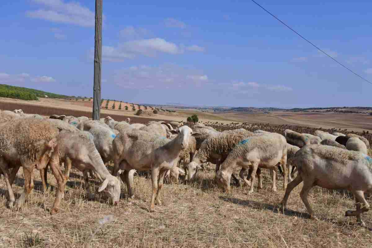 nuevo abono de ayudas de la pac para ganaderos y agricultores de clm