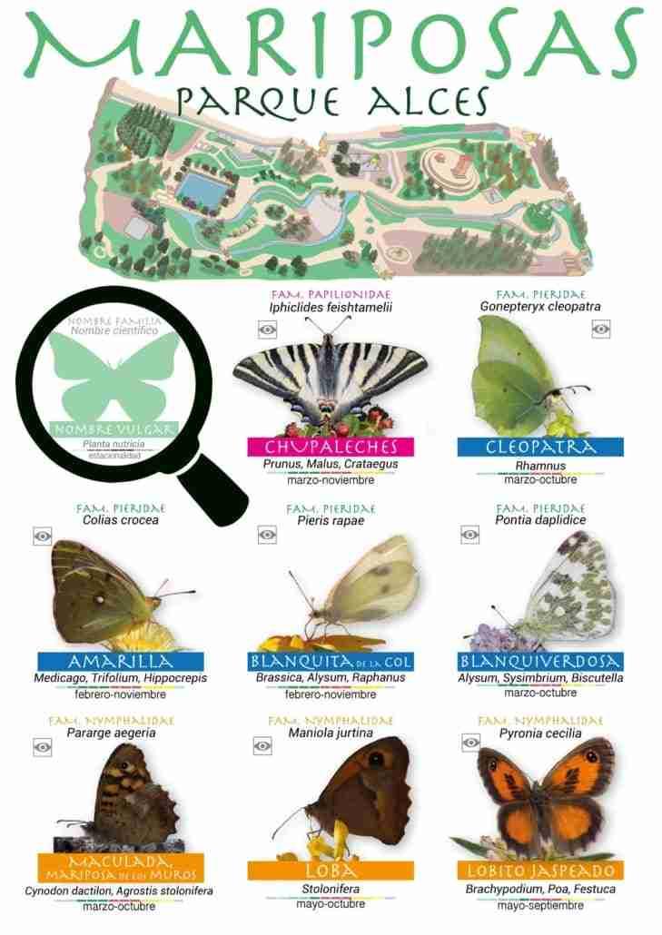 Guía de especies de mariposas en el parque Alces de Alcázar de San Juan por el Día Internacional de la Biodiversidad 2