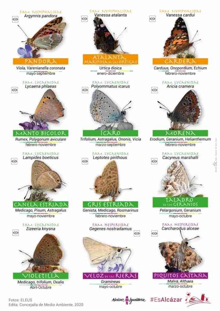 Guía de especies de mariposas en el parque Alces de Alcázar de San Juan por el Día Internacional de la Biodiversidad 3