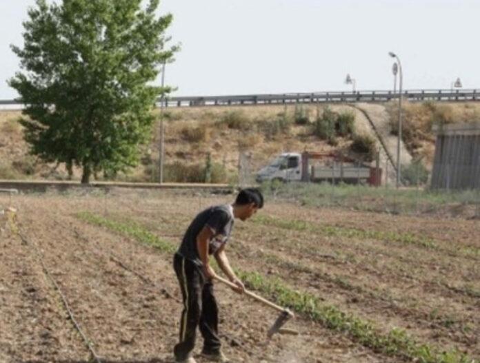 adjudicadas parcelas para huertos ecologicos urbanos en torralba de calatrava