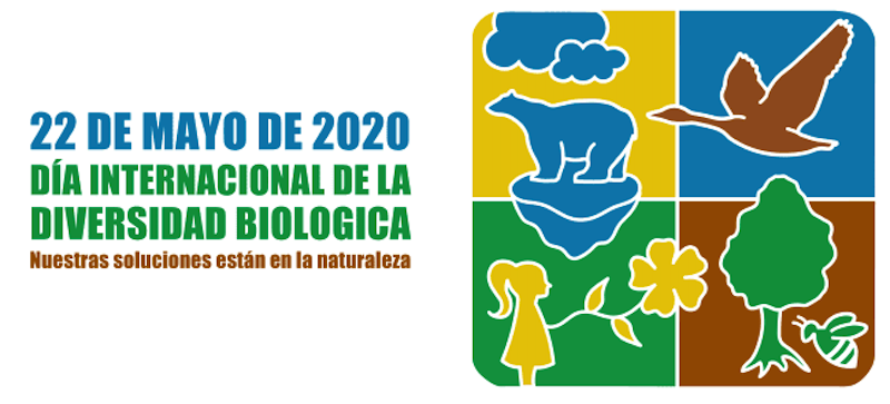 Guía de especies de mariposas en el parque Alces de Alcázar de San Juan por el Día Internacional de la Biodiversidad 1