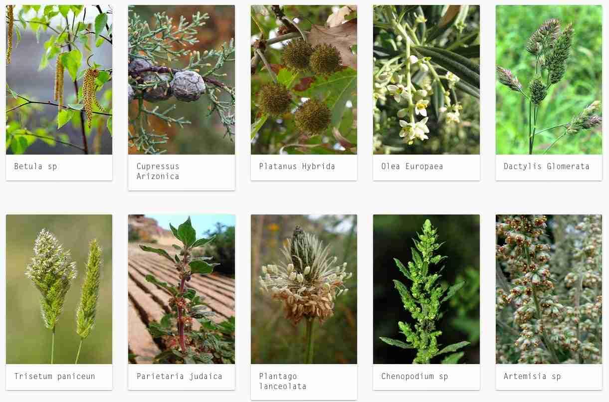 Los alérgicos sufrirán la múltiplicación por 5 del nivel del polen este mes de mayo 3