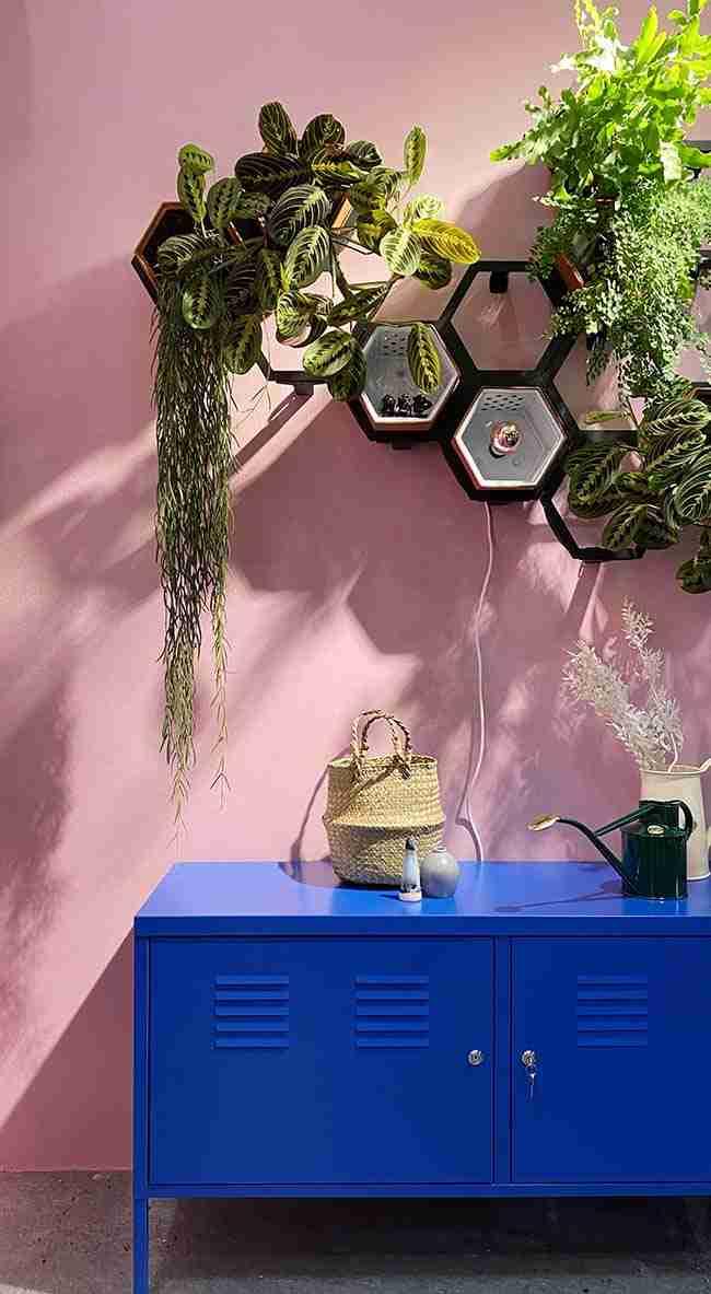 la naturaleza entra en casa, plantas de interior