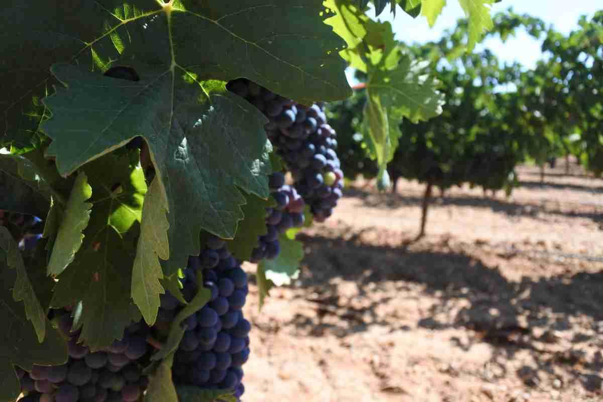 pago a viticultores de clm