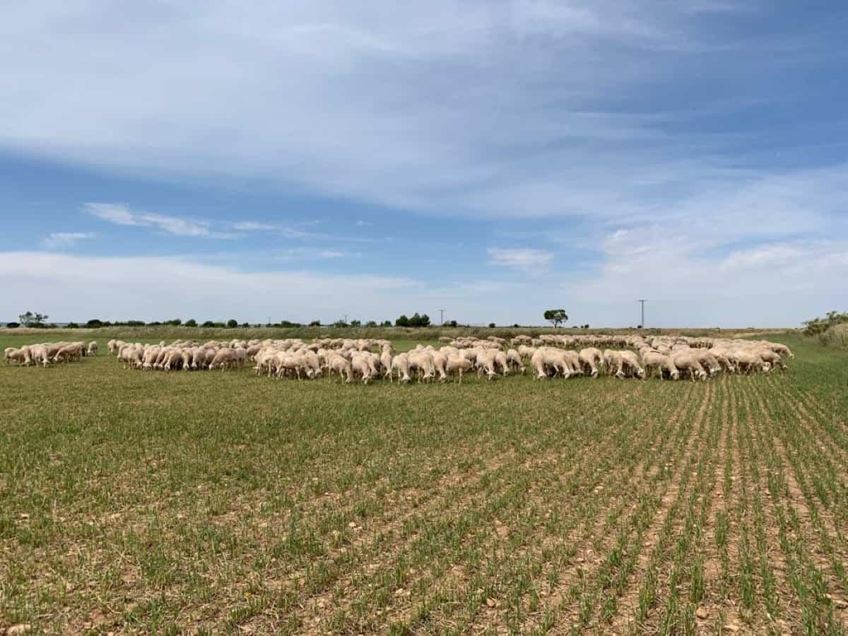 upa clm reinvidinca agricultura y ganaderia familiares dia del medio ambiente
