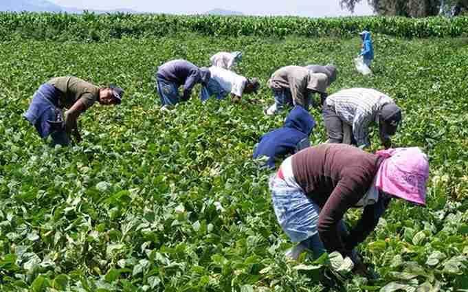 UGT FICA CLM reclama trabajar sobre la precariedad de los temporeros y revisar medidas de seguridad laboral en campañas agrícolas 1