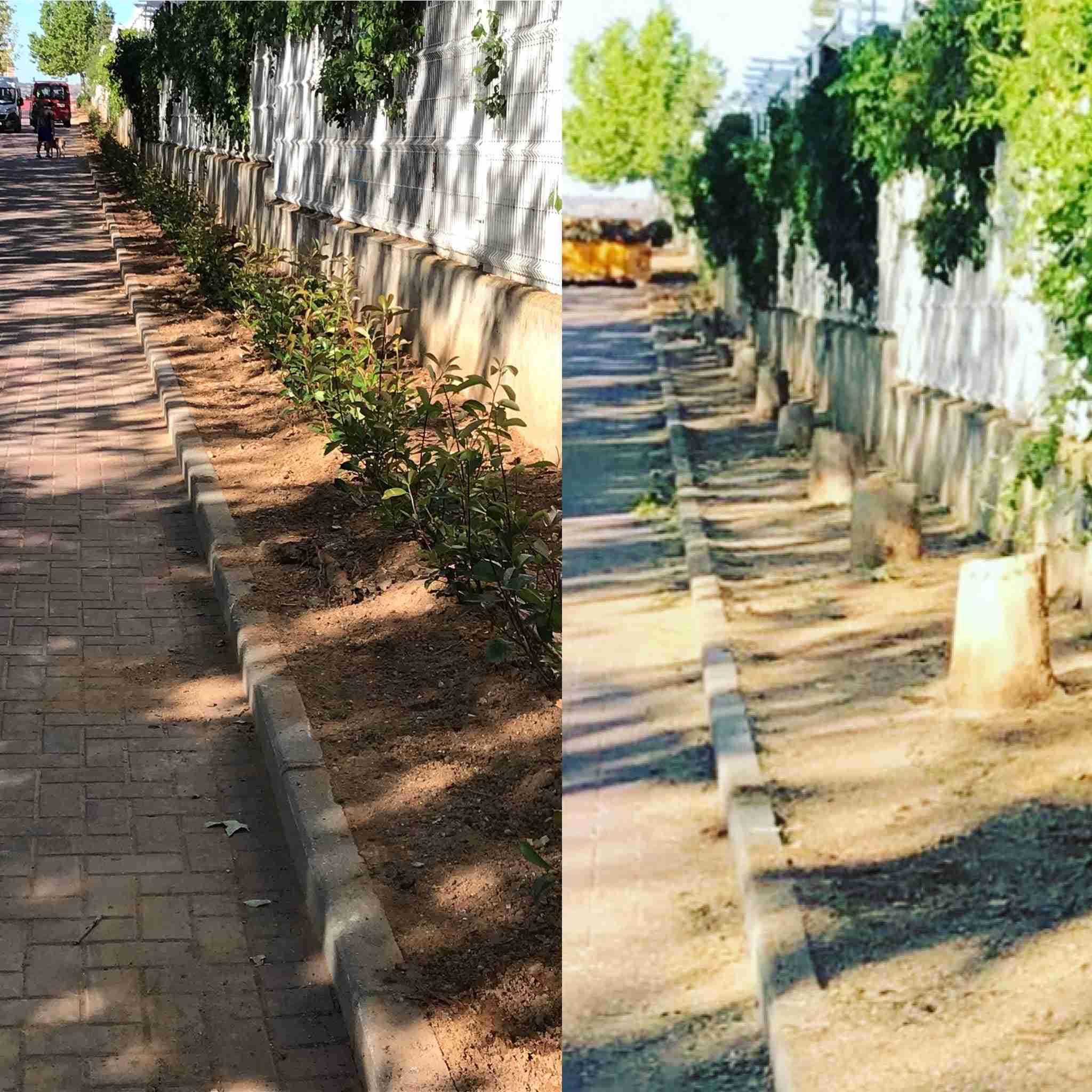 Tala de árboles y planificación Parque de Bélgica en Toledo 9