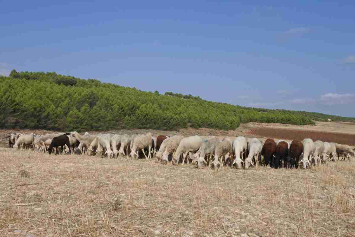 Más de 3,9 millones de euros para ayudas en Ciudad Real, con alcance a 3.000 agricultores y ganaderos profesionales 1