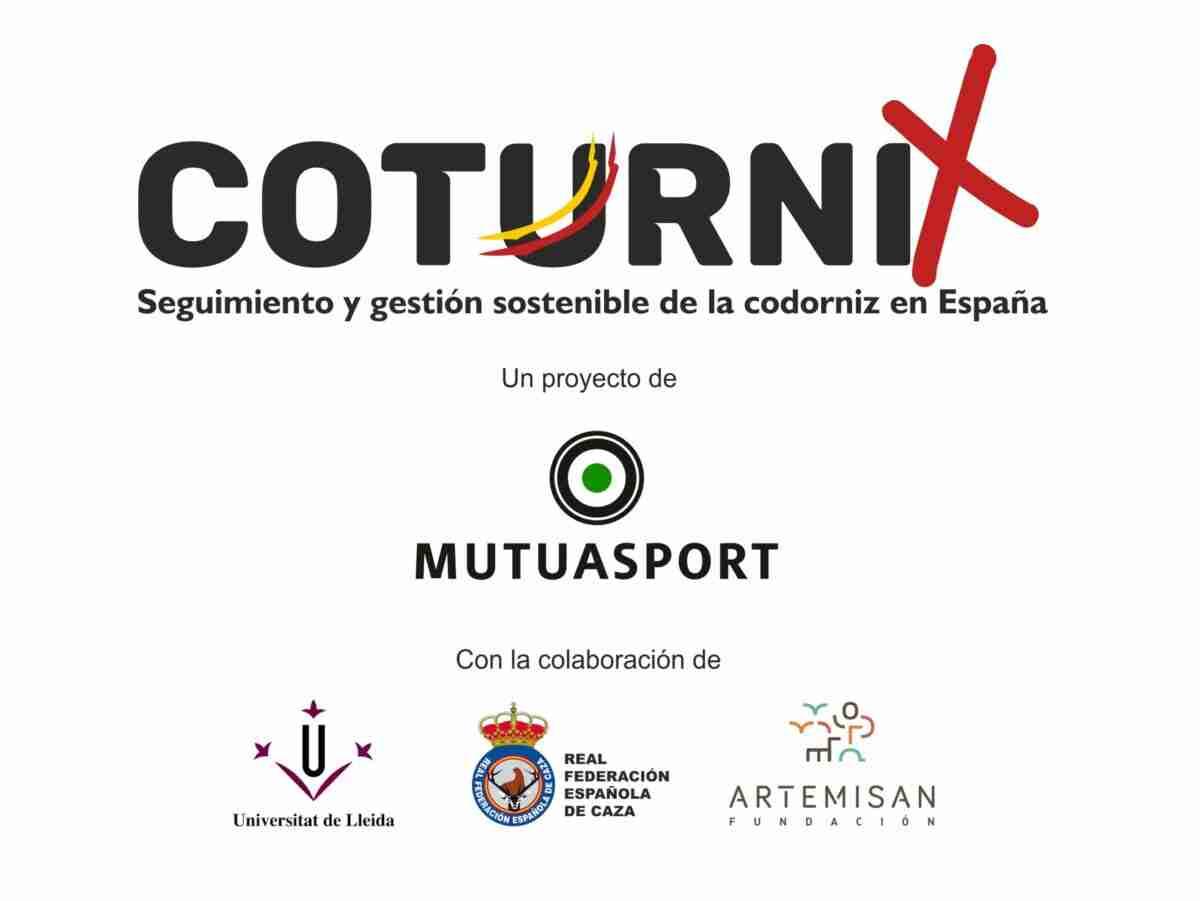 Nació 'Coturnix', un proyecto de ciencia ciudadana para la conservación de la codorniz común 1