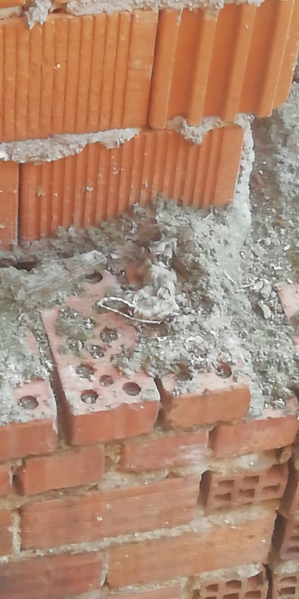 El grupo socialista de Torralba de Calatrava le pide al equipo de Gobierno que actúe por la presencia masiva de ratas en diversos barrios 3