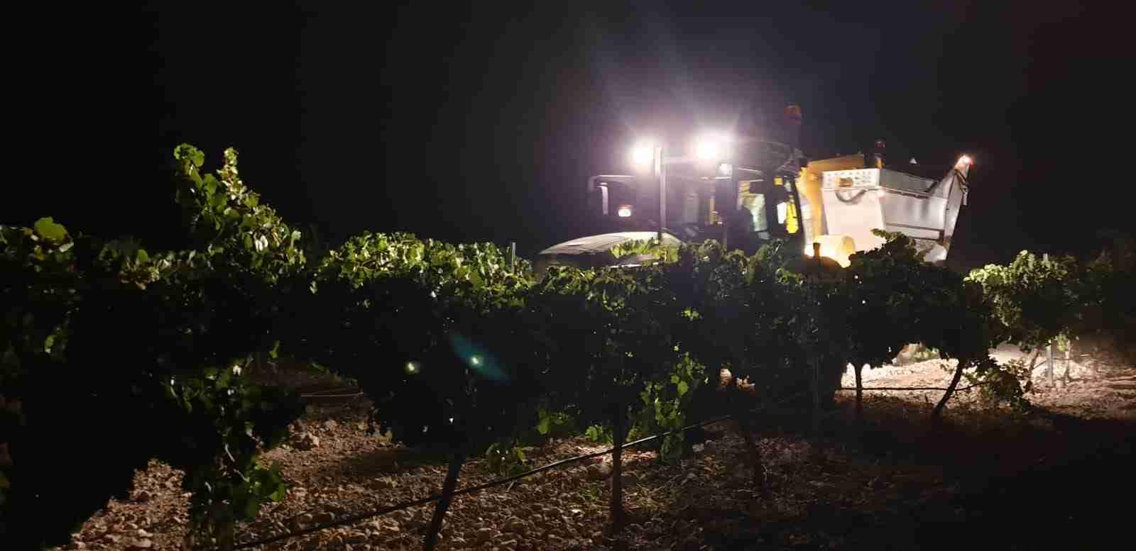 Preocupación entre los agricultores de El Progreso por los precios de la uva que se están viendo en la provincia 5