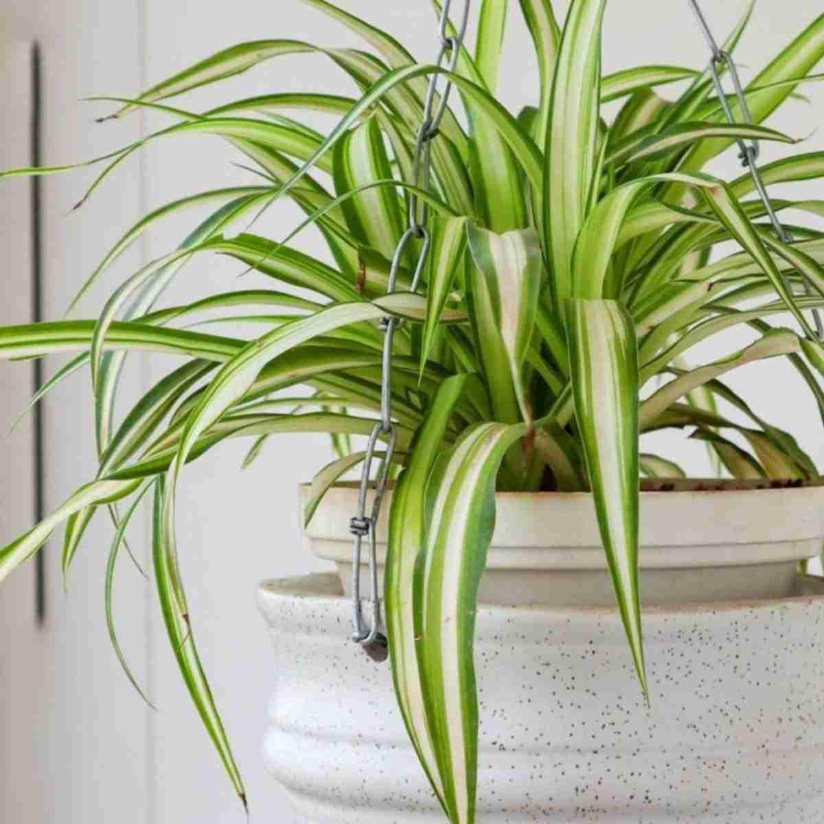 6 Plantas de invierno para decorar tu hogar 11