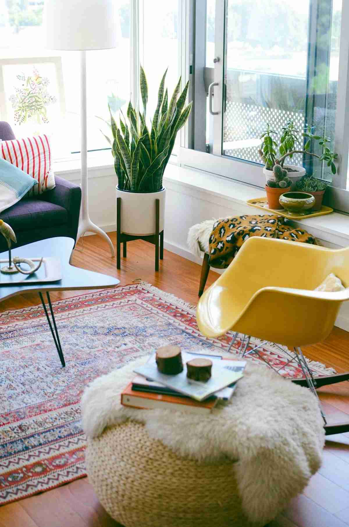 6 Plantas de invierno para decorar tu hogar 7