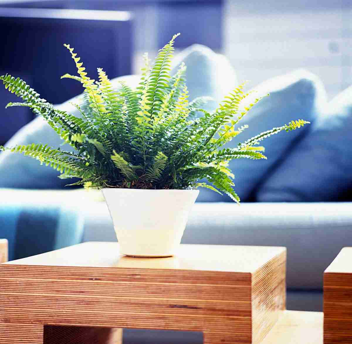 6 Plantas de invierno para decorar tu hogar 15