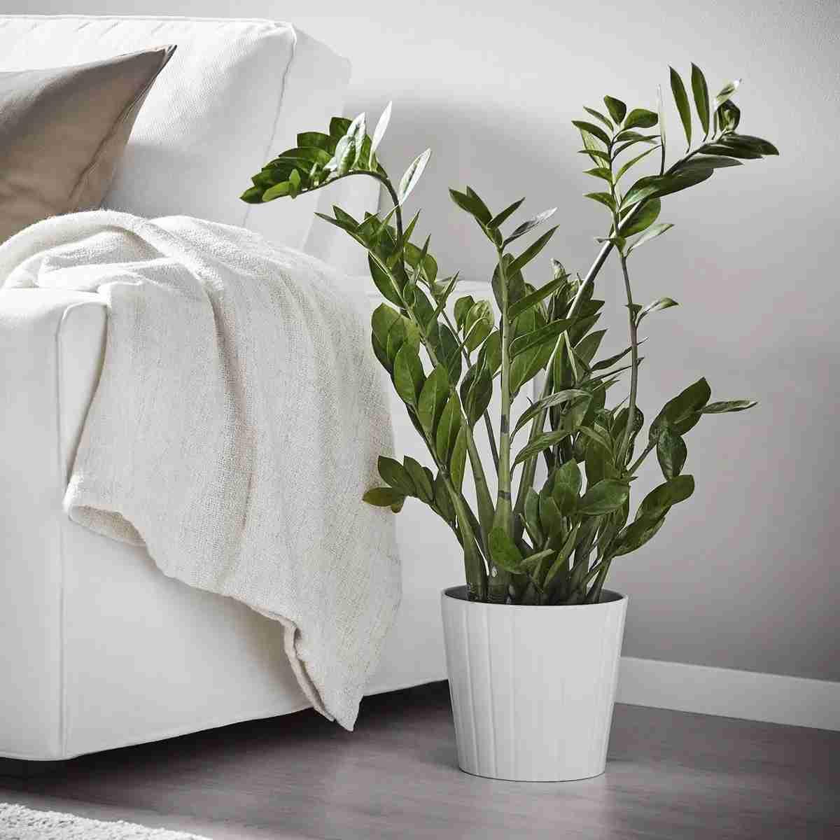 6 Plantas de invierno para decorar tu hogar 14