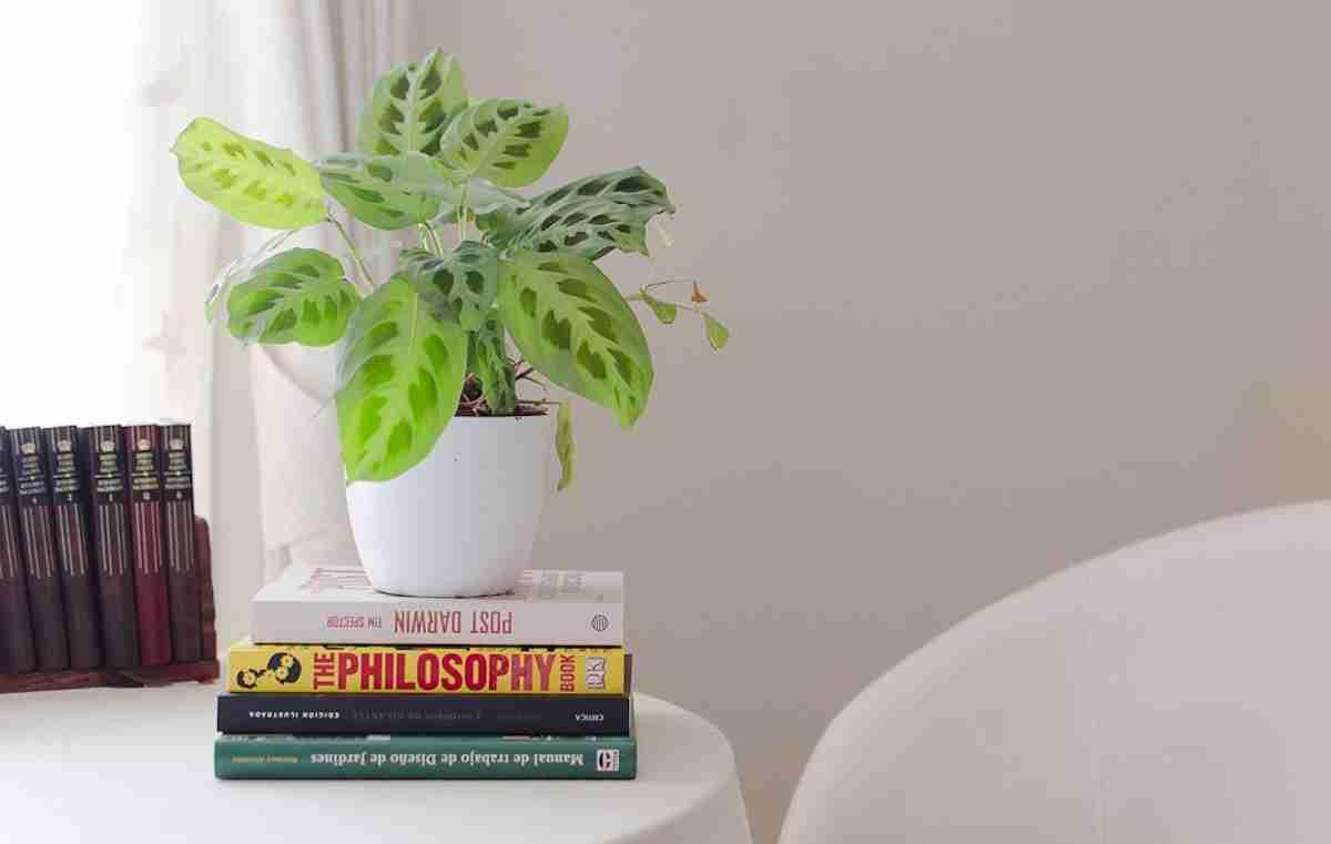 6 Plantas de invierno para decorar tu hogar 8