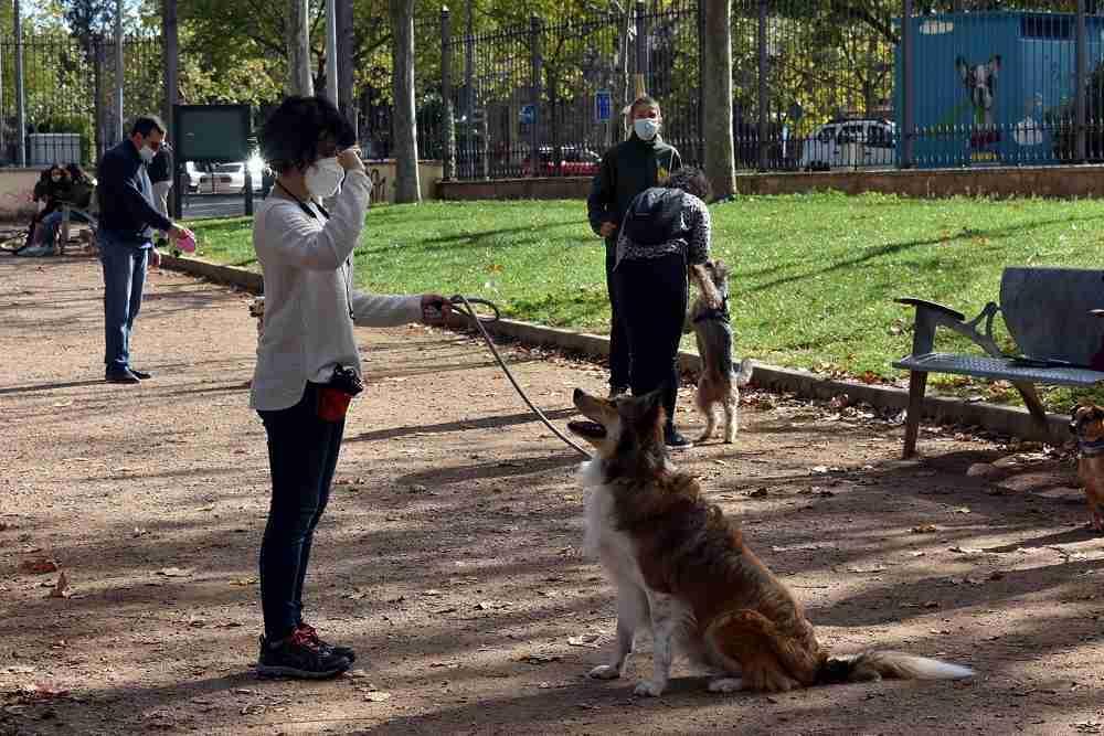 Training canino