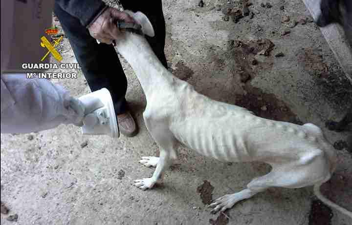 La Guardia Civil investiga a 1 persona por maltrato de animales domésticos 6