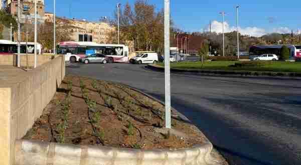 Plantaciones plaza Safont 03