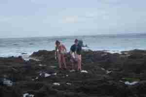Investigadores de la ULL estudian efectos del cambio climático en especies costeras de Tenerife 1