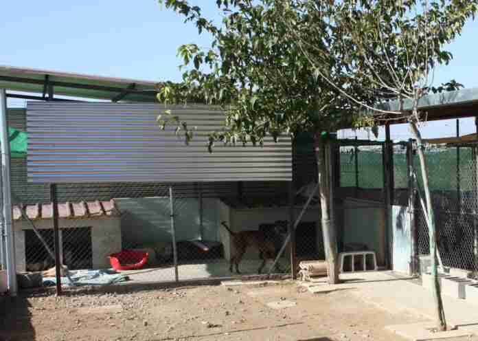 torralba dona terreno a asociacion animalista