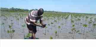 agricultor colabora con treedom