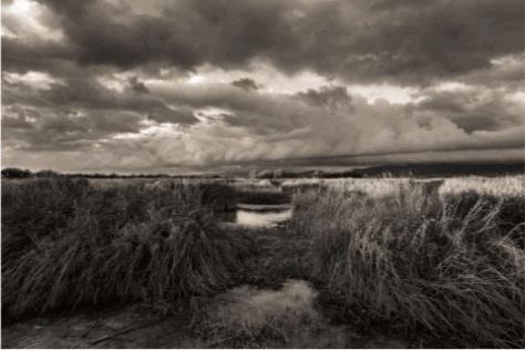Ya están los ganadores del 9º Concurso Nacional Fotográfico Día Mundial de los Humedales de Villarrubia de los Ojos 1