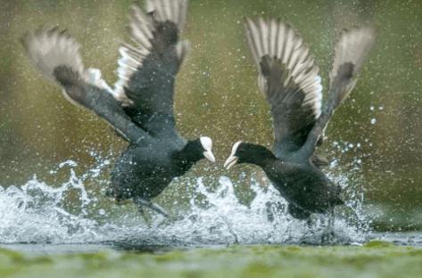 Ya están los ganadores del 9º Concurso Nacional Fotográfico Día Mundial de los Humedales de Villarrubia de los Ojos 6