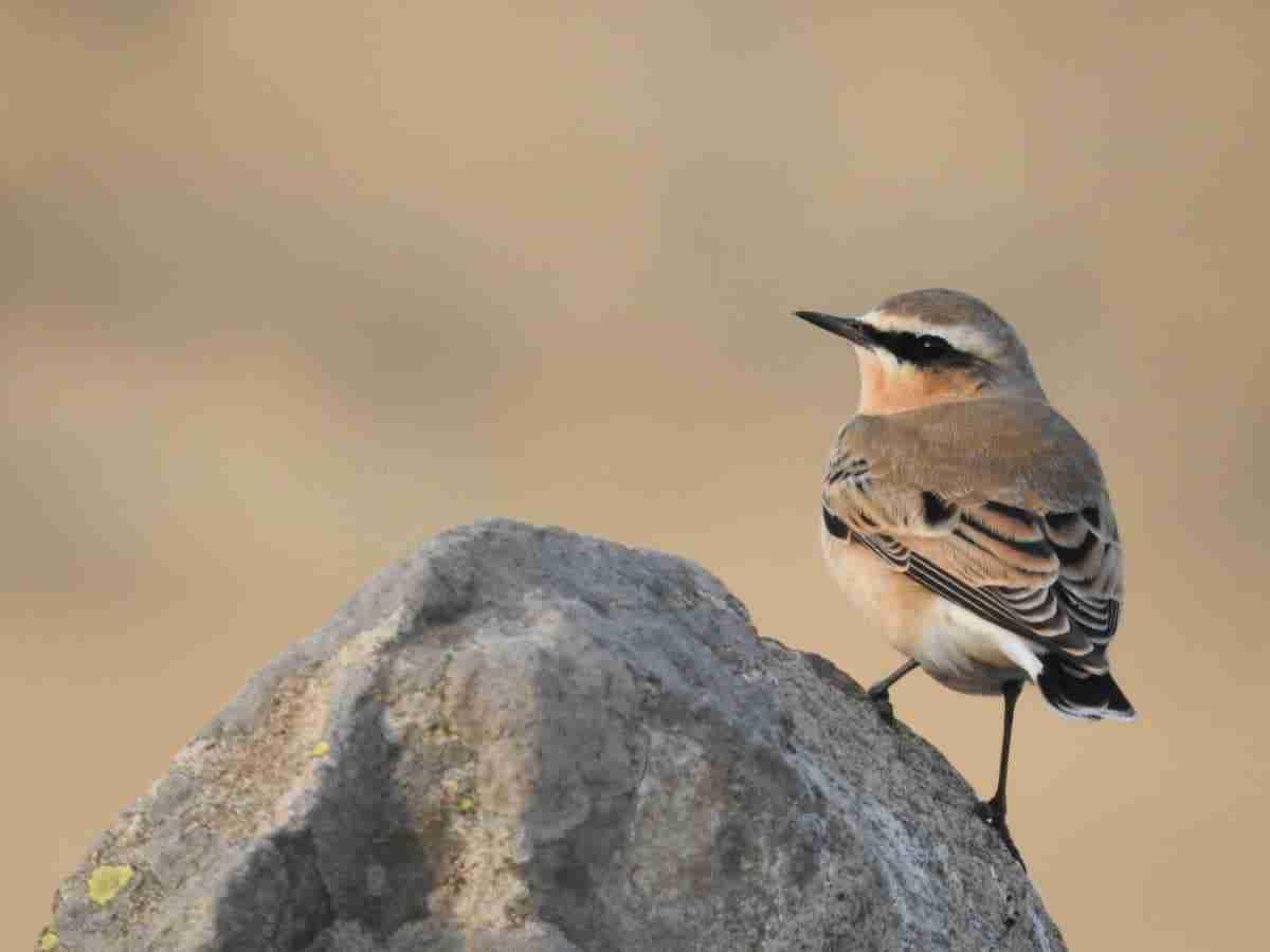 avistamiento aves sierra norte guadalajara