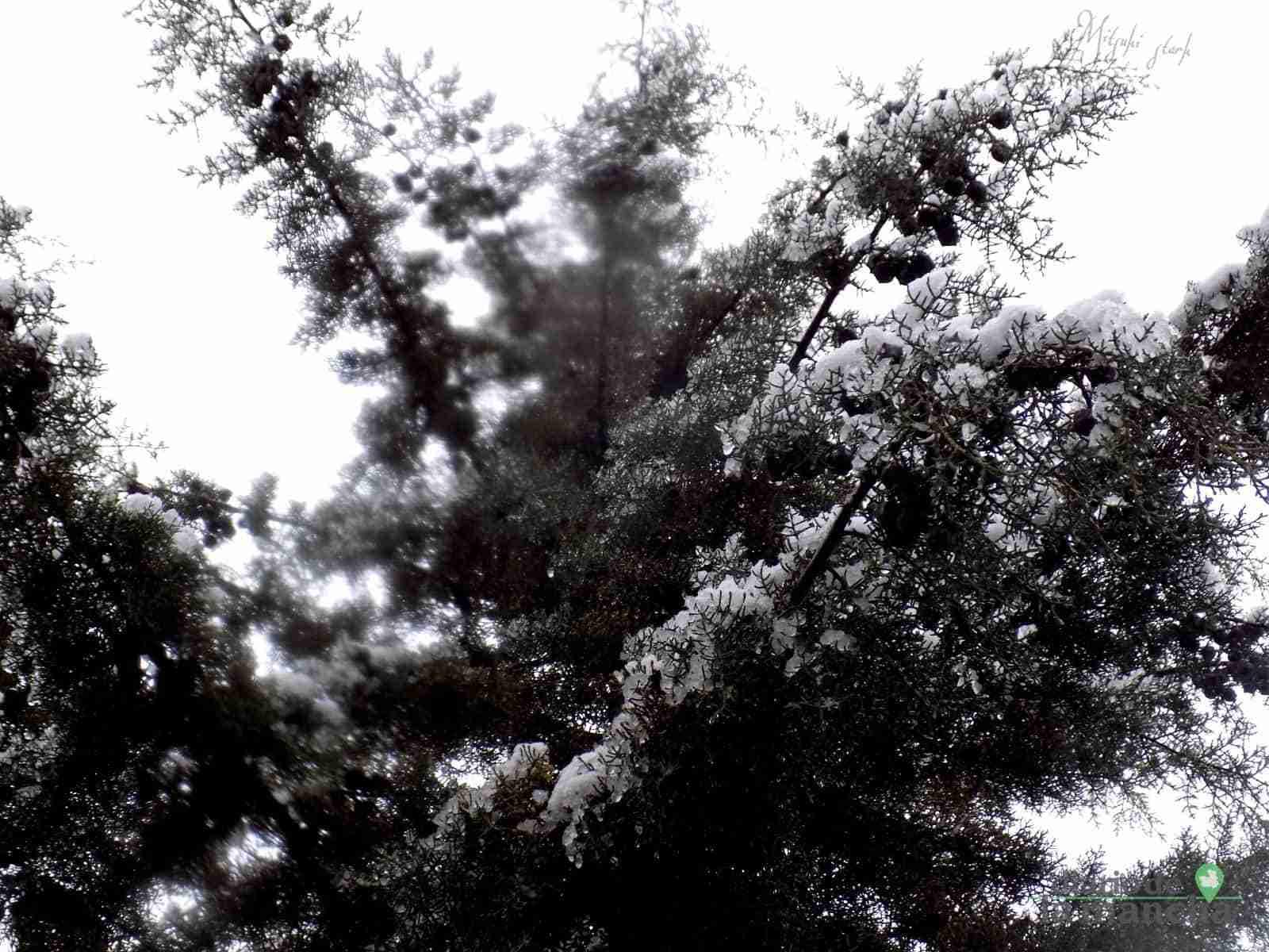 Fotografías de la primera nevada de 2021 en Tomelloso 30