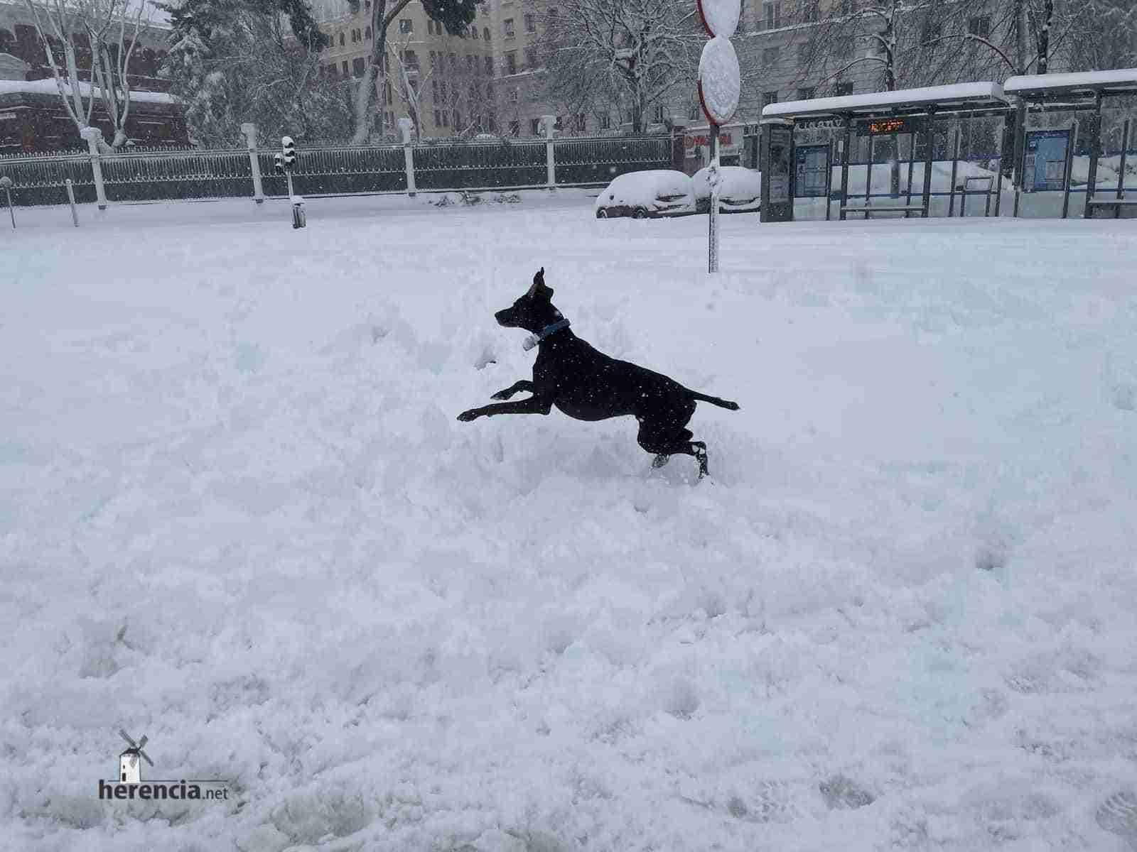 Fotografías de la nevada de enero en Madrid (España) 135