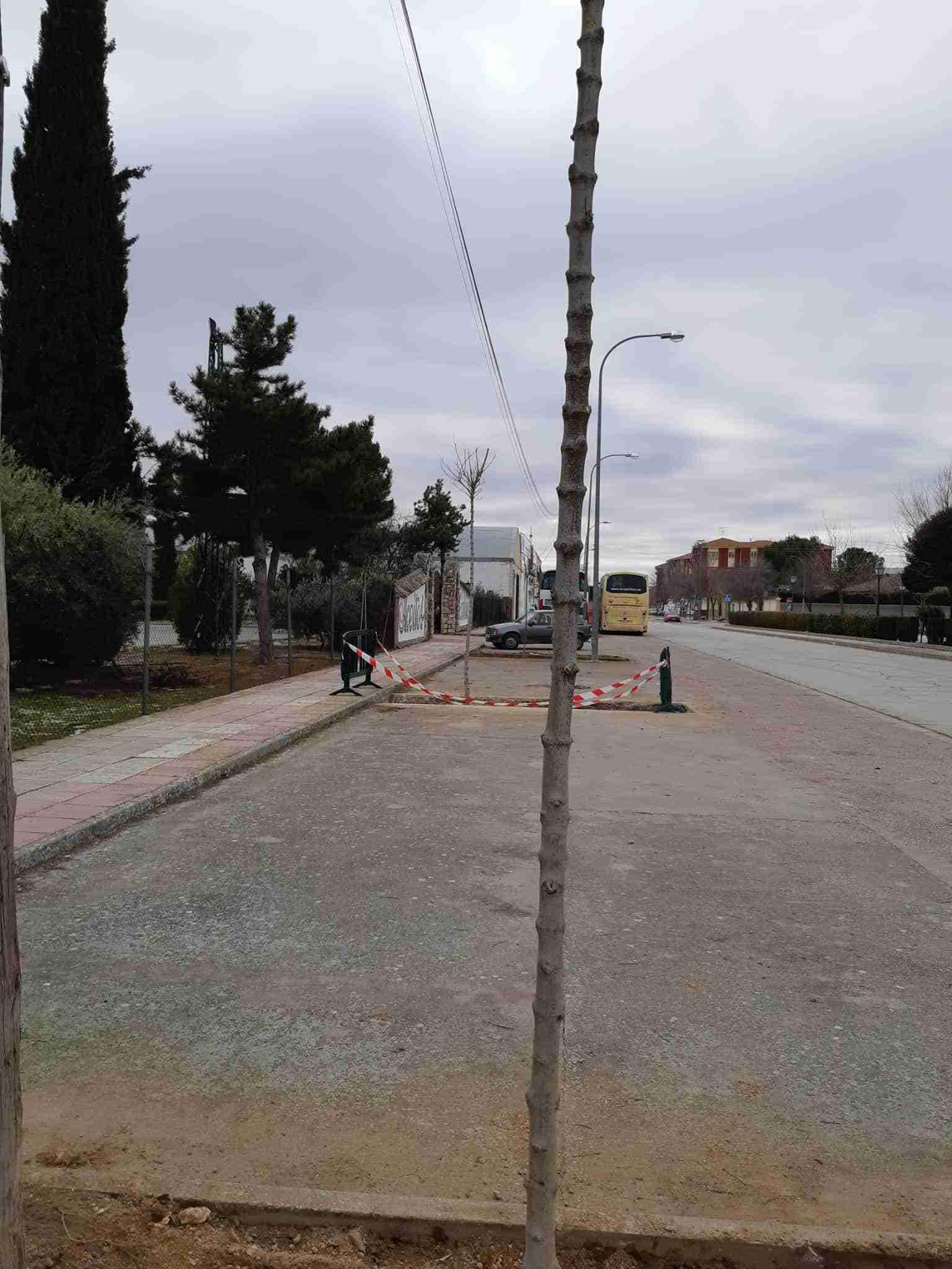 La Concejalía de Medio Ambiente de Quintanar de la Orden planta 70 árboles en la localidad 5
