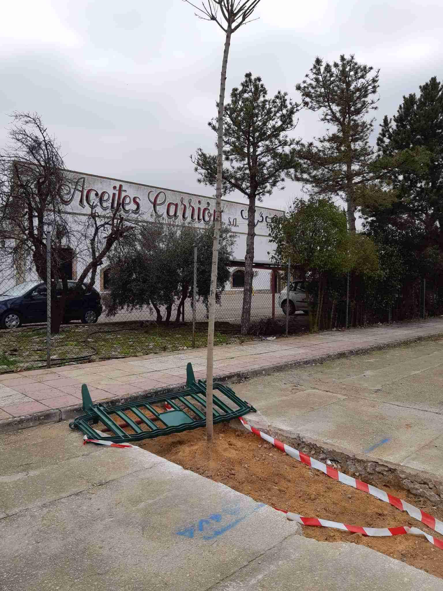 La Concejalía de Medio Ambiente de Quintanar de la Orden planta 70 árboles en la localidad 4
