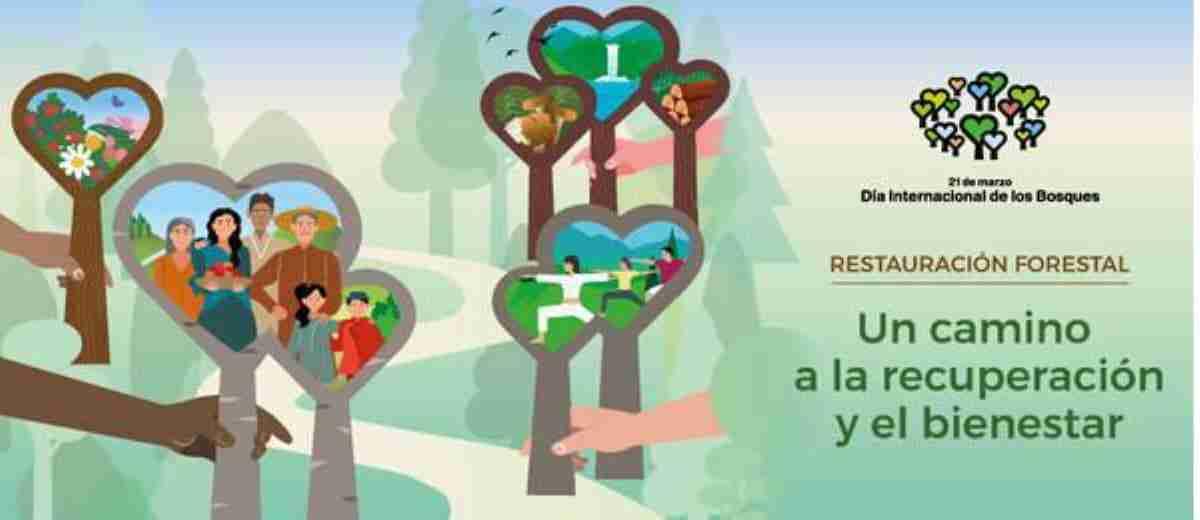 dia forestal mundial