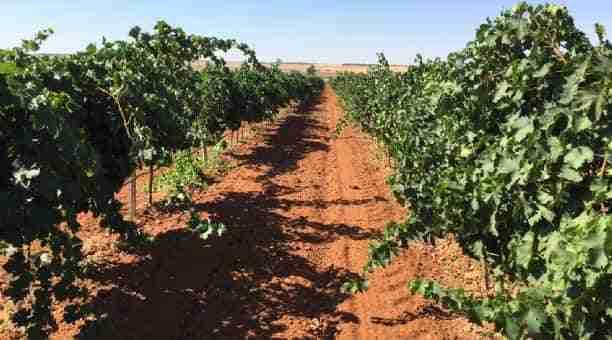UPA pesimista: el sector vitivinícola morirá si no se actúa rápido 1